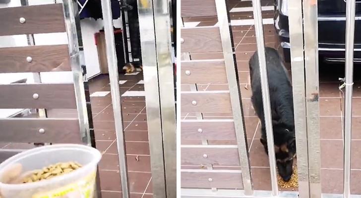 De hond blijft alleen achter omdat haar baasje in quarantaine is: een gulle buurman brengt haar elke dag eten