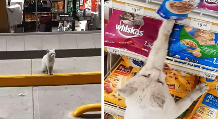 A kitten waits every day in front of the grocery store asking passersby to buy food