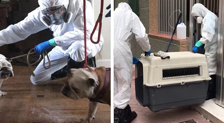 Questa organizzazione si prende cura degli animali rimasti soli in casa a causa del coronavirus