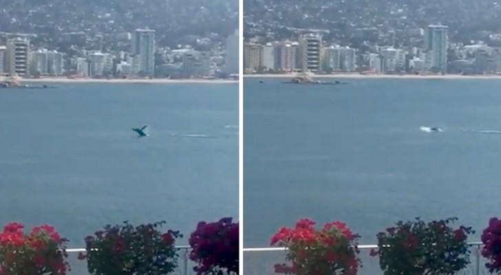 Coronavirus : une baleine nage en toute tranquillité sur la côte mexicaine en l'absence de bateaux et de navires en mouvement