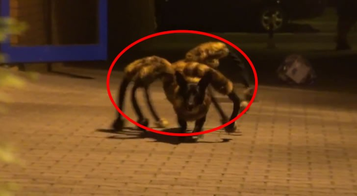 Don't miss this prank of the mutant spider-dog, one of the most devilish I've ever seen