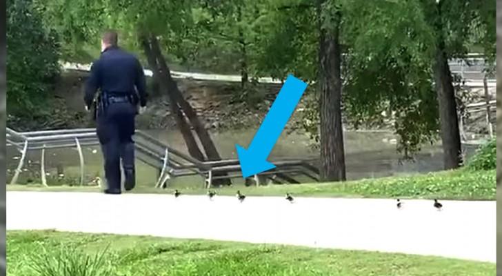 Un poliziotto gentile scorta degli anatroccoli che avevano perso la mamma nel parco chiuso per Coronavirus