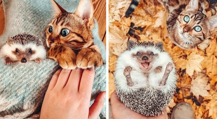 Een meisje fotografeert de avonturen van haar kat en haar schattige egel: een ongewone en speciale vriendschap