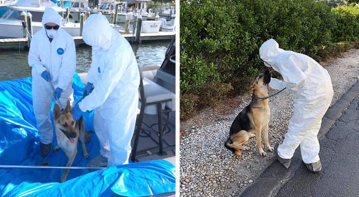 Hund ist alleine auf Boot, weil sein Herrchen mit Covid-19 im Krankenhaus liegt. Aber der Sheriff rettet ihn.