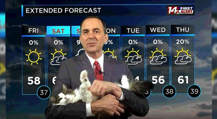 Le présentateur météo confiné annonce le temps depuis chez lui : son chat entre en scène et lui vole la vedette