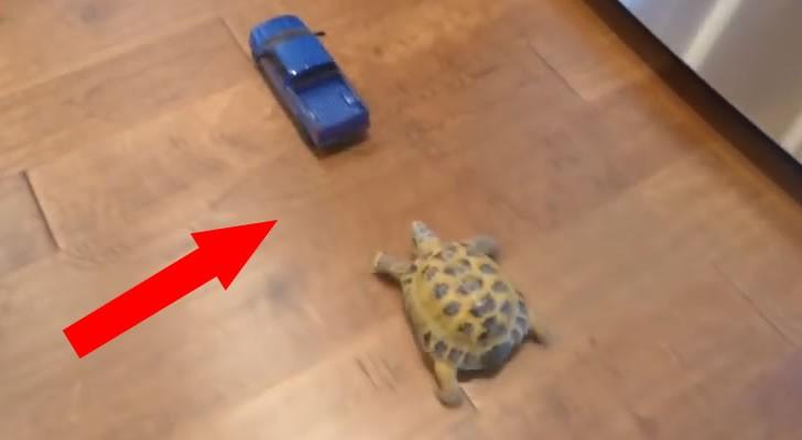 Chi vincerà l'avvincente gara tra il camioncino blu e la tartaruga indemoniata?