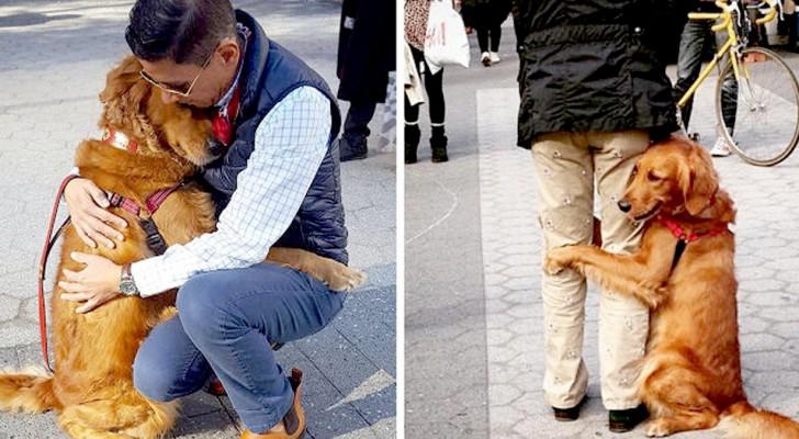 Questo Golden Retriever non può fare a meno di abbracciare i passanti ogni volta che il padrone lo porta a spasso