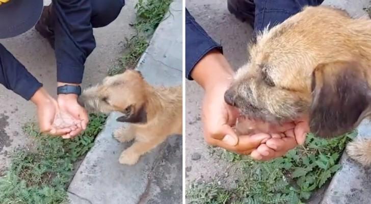 En generös polis stannar för att ge en gatuhund lite vatten på den tomma gatan under coronaviruspandemin