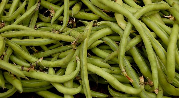 Bohnen: Reich an Ballaststoffen und Proteinen können sie die Knochen stärken und das Nervensystem schützen