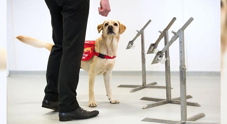 I cani potrebbero annusare e identificare i pazienti affetti da Covid-19: al via il progetto sperimentale