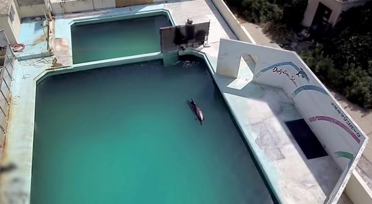 Na 15 jaar opsluiting in het zwembad van een aquarium sterft een in de steek gelaten dolfijn in zijn eentje