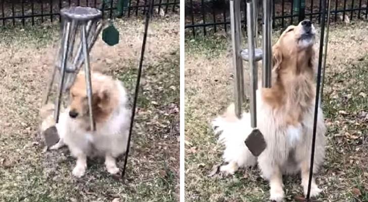 """Een lief hondje """"zingt en speelt"""" elke keer dat ze haar windgong nadert"""