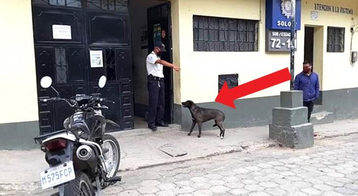 Arrestan al propietario porque ha violado la cuarentena: la perra lo espera por horas fuera de la estación de policía