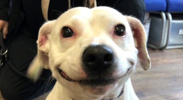 Questa cagnolina che sembra sorridere ha trovato una nuova casa grazie al suo aspetto adorabile