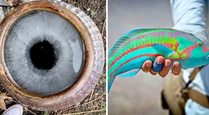 21 spektakuläre Fotos, die die ganze Fremdartigkeit der Natur um uns herum zeigen