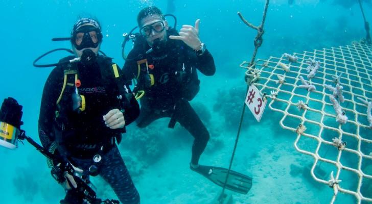 Australia: in assenza di turisti, i sub piantano coralli per ripopolare la Grande Barriera Corallina