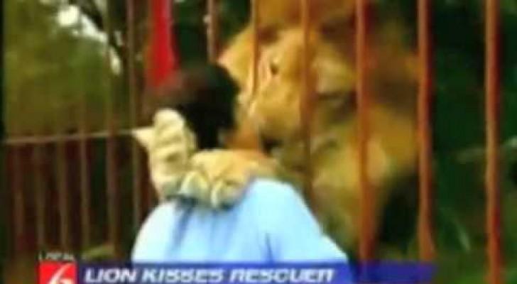 Eine Frau trifft einen Löwen, den sie vor langer Zeit aufgezogen hat: Die Reaktion des Tieres ist einmalig!