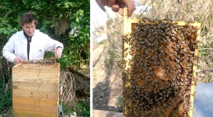 Seine Bienen hatten seit 20 Jahren nicht mehr so viel Honig produziert: die Ursache, die Abwesenheit des Menschen und die Verringerung der Umweltverschmutzung