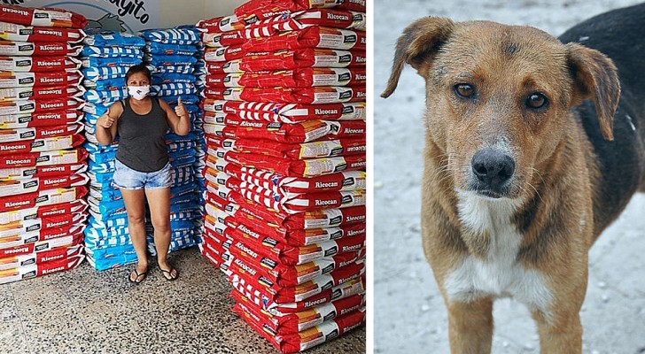 Een bedrijf schenkt tijdens de pandemie meer dan 15 ton voer voor huisdieren aan alle zwerfhonden in nood