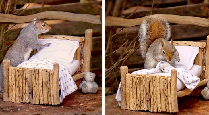 Una donna crea un mini-letto in legno per scoiattoli e ne fotografa uno che ogni sera