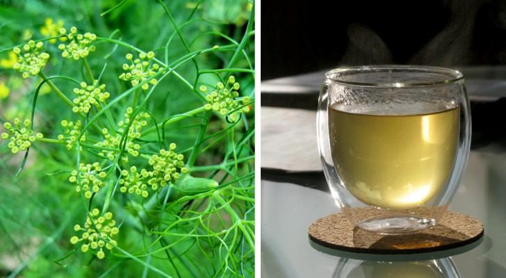Funcho: rico em antioxidantes naturais, esse vegetal é digestivo e ajuda a desinchar o abdômen