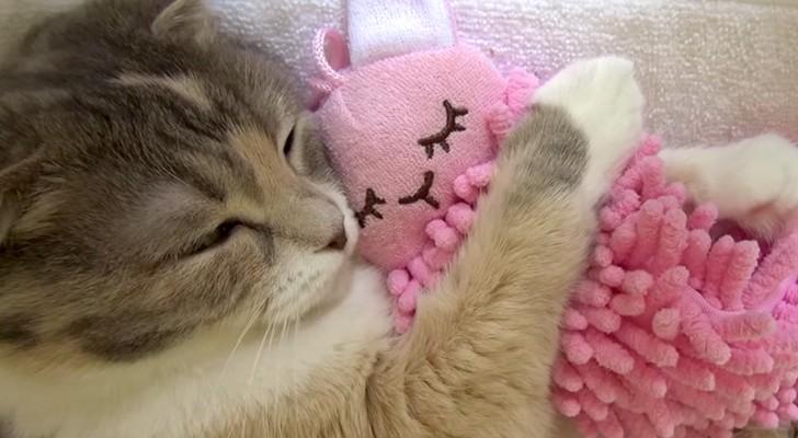 Pouvez-vous imaginer quelque chose de plus mimi qu'un chat avec son doudou?