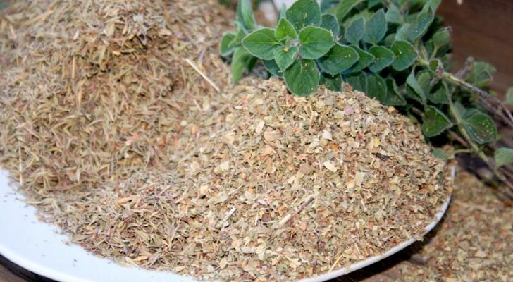 Orégano: planta aromática rica em vitaminas, promove a digestão e regula a pressão arterial