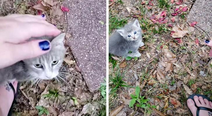 Ze geeft dagenlang een zwerfkat te eten, maar ontdekt dan dat ze onder haar schuur 5 kittens heeft gebaard
