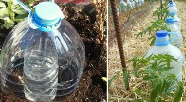 Regar reciclando botellas de plástico: un método ingenioso para evitar inútiles desperdicios de agua