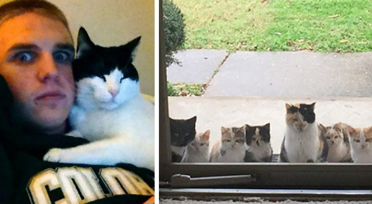 20 Beispiele, in denen Katzen sich ihre Besitzer ausgesucht haben, ohne ihnen eine Alternative zu geben