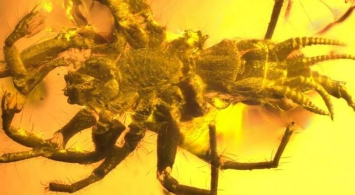 Gli scienziati ritrovano una creatura preistorica conservata nell'ambra: è un