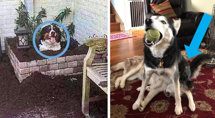13 urkomische Fotos von Hunden, die die Erwartungen ihres Besitzers