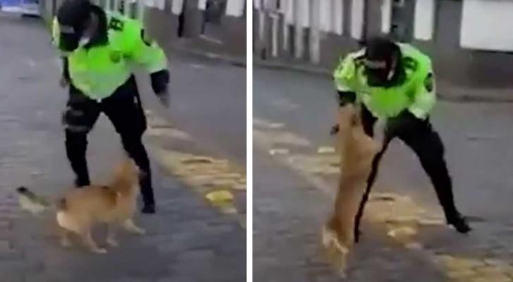 El perrito callejero no logra parar de agradecer al policía que le lleva para comer en plena cuarentena