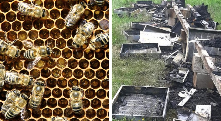 In Friuli qualcuno ha dato fuoco a 21 arnie: 2 milioni di api sono bruciate a causa di questo gesto ignobile