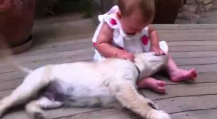 Alcuni preferiscono tenere i cani lontani dai bambini piccoli. Ma... Perché mai???