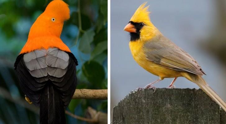 12 tra gli uccellini colorati più belli e fantasiosi che potreste mai osservare in natura