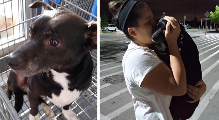 Na 6 lange jaren slaagt een vrouw erin haar hond te knuffelen: ze dacht dat ze hem voor altijd kwijt was
