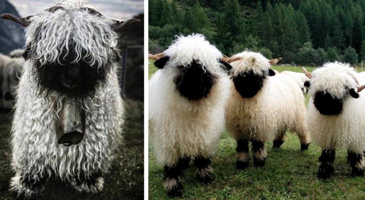 Divertenti e inquietanti al tempo stesso: queste pecore