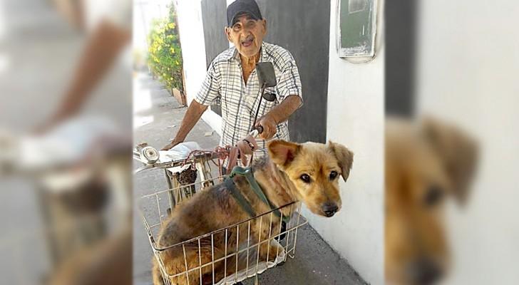 Aos 90 anos, ele transporta seu cão que sofre de artrite de bicicleta, já que não pode mais andar como antes
