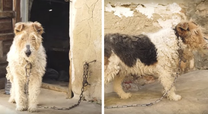 She had spent her whole life in chains and no one had ever given her a name: she is now safe and lives happily with a new family