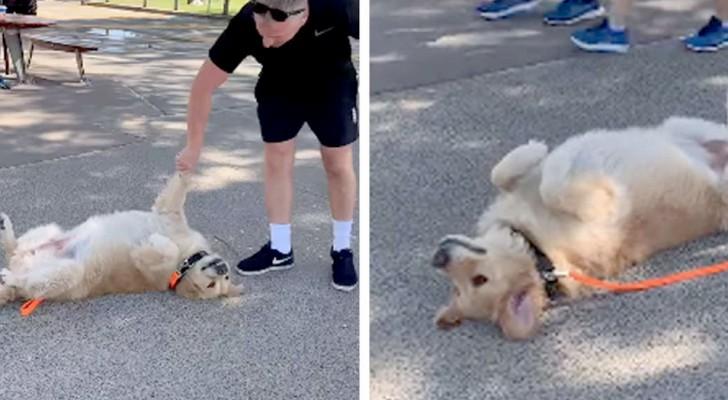Vincent, den söta lilla hunden som låtsas svimma på marken för att inte gå hem från sin promenad med sin husse