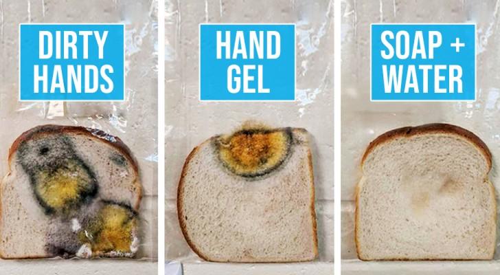 L'esperimento di questa insegnante dimostra chiaramente cosa significa non lavare le mani e poi toccare il pane