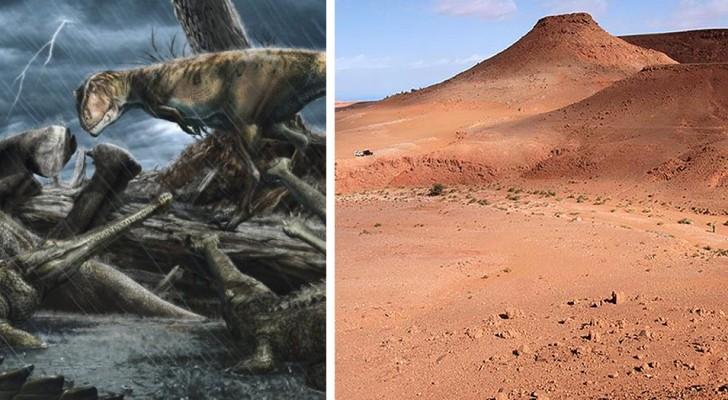È in Marocco il luogo più pericoloso della storia terrestre: in antichità ospitava enormi predatori carnivori