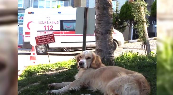 Een man wordt in het ziekenhuis opgenomen met het coronavirus: zijn hond volgt hem en wacht dagenlang bij het ziekenhuis