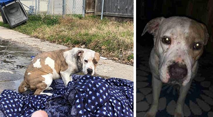 Une petite chien abandonnée a attendu pendant des jours le retour de sa famille, couchée sur une couverture