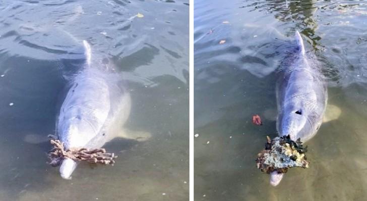 Dieser Delphin