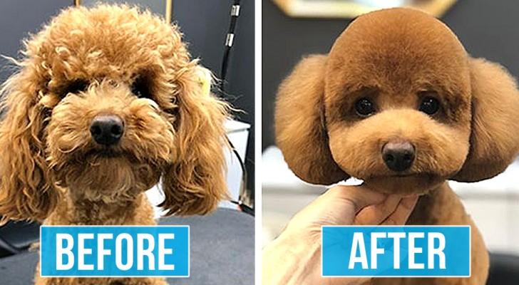 15 photos de chiens qui ne semblent plus eux-mêmes après le toilettage