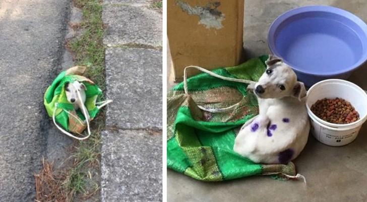 Abbandonano un cucciolo sul ciglio della strada chiuso in una borsa: un uomo lo salva e gli trova una famiglia
