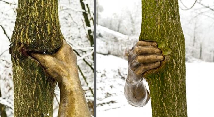 Queste mani di bronzo furono attaccate agli alberi nel 1968: ora sono ancora lì ad afferrarli