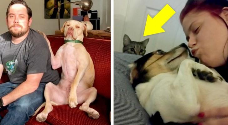 20 scatti adorabili ci mostrano quanto gli animali possano essere gelosi dei loro umani